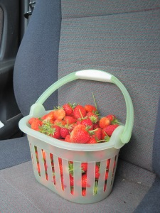 ROAD TRIP FOOD: One last strawberry load from last year's plants. Disclaimer: Cheetos photoshopped out to protect the guilty.